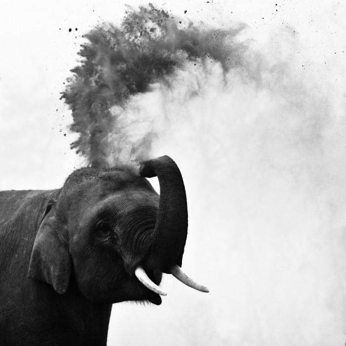 Elephant au Népal