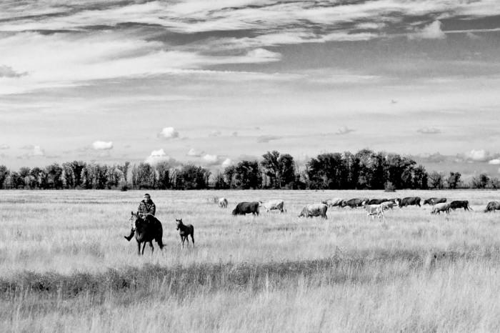 cowboy et son poulain