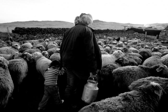 Saute mouton 1