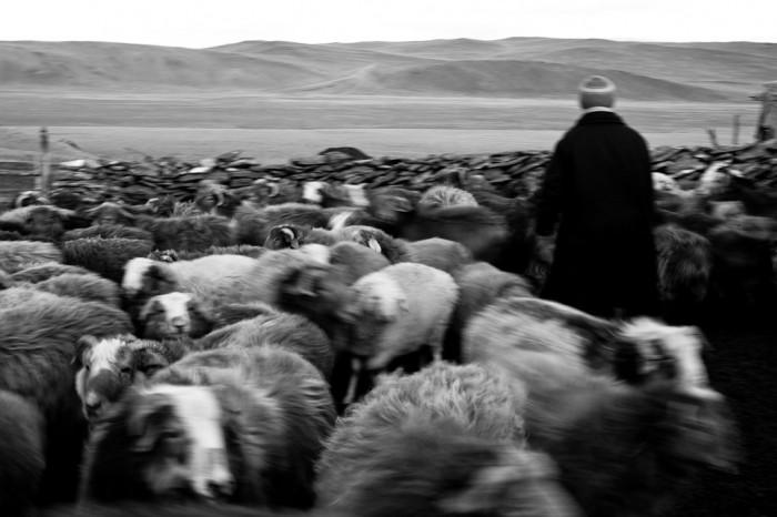 Saute mouton 2