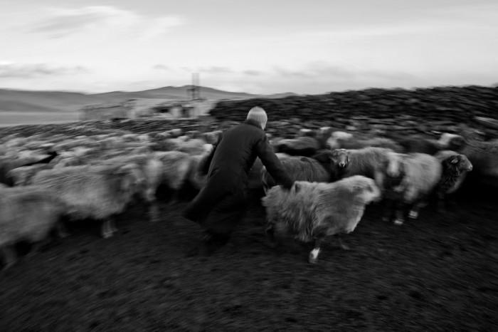 Saute mouton 3