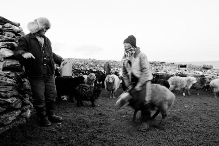 Saute mouton 4