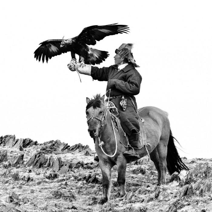 aigles en mongolie