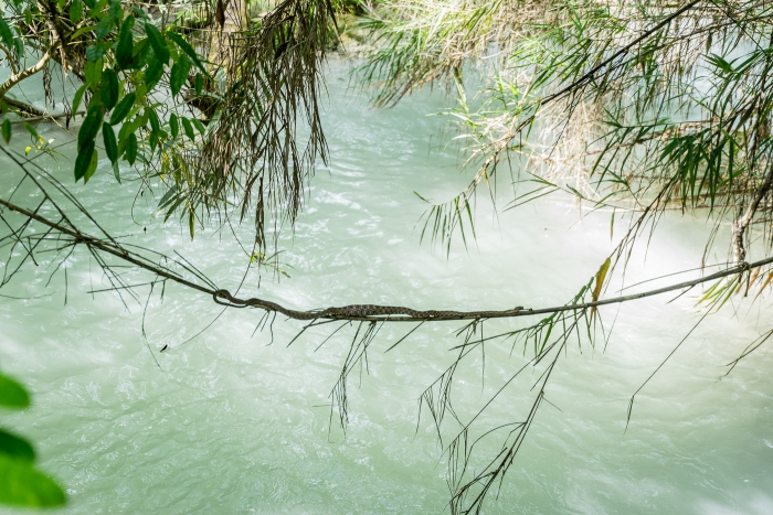 Kuang Si Falls and snake-3