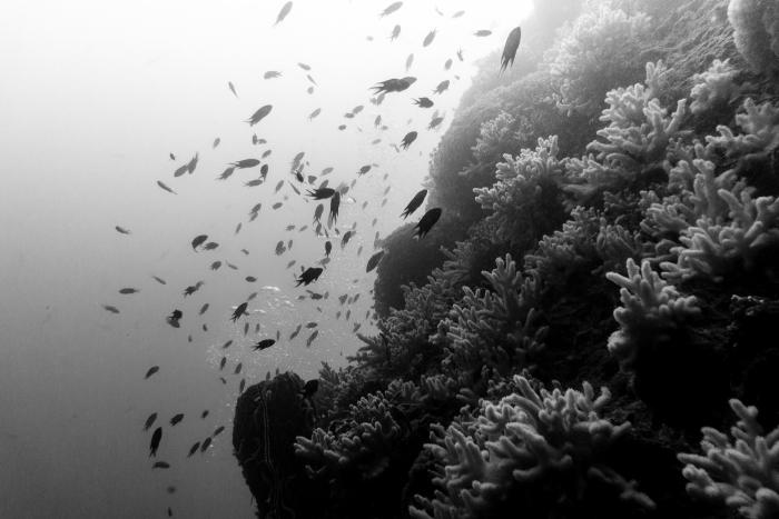 Photos sous-marine-7